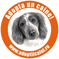 Caini - Anunturi adoptii caini