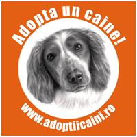 Badge Adoptiicaini.ro 200