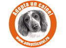 Video Atac de panica -Golden Retriever