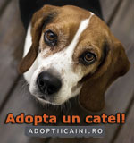 Adopta un catel!