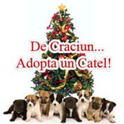 Adoptii Caini