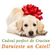 Cadoul perfect pentru Craciun - Daruieste un catel!
